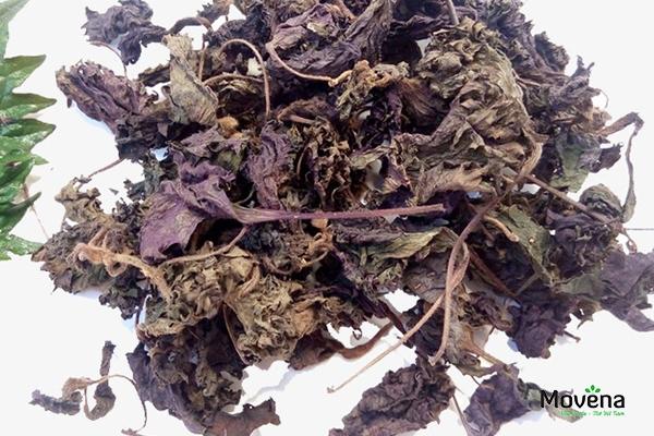 Lá tía tô khô cũng cực hiệu quả trong việc trị tàn nhang